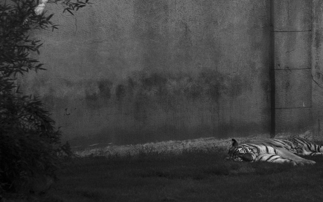 Nachts sind alle Tiger grau